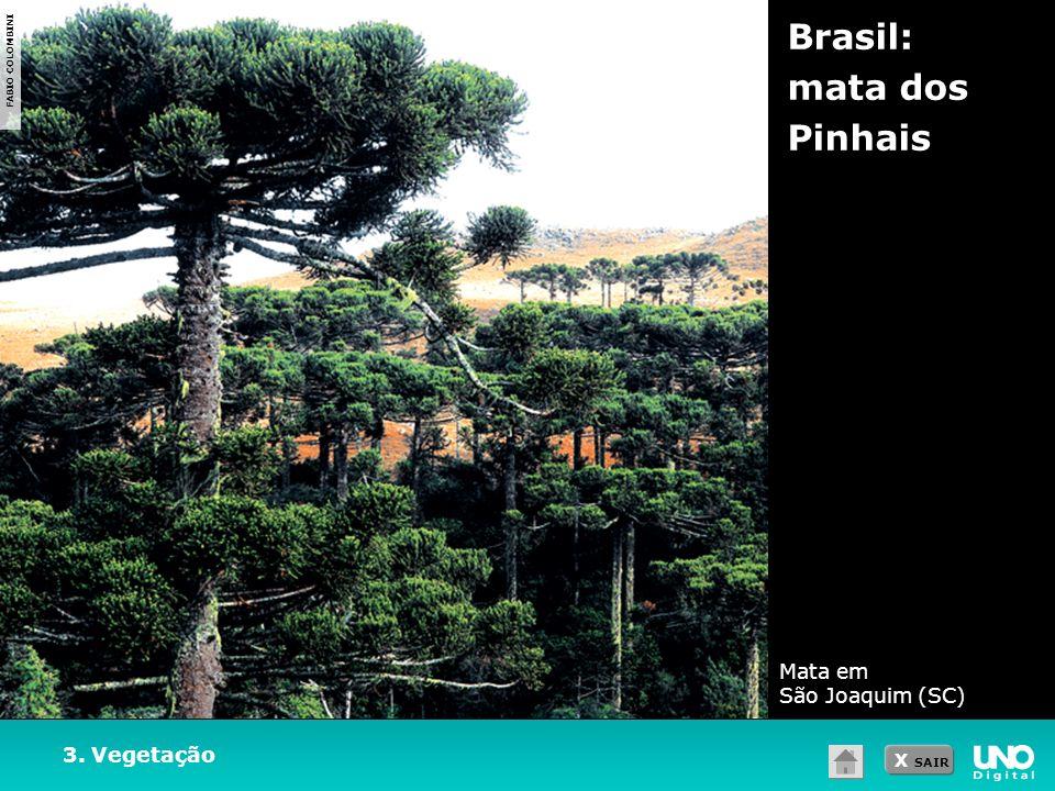 X SAIR 3. Vegetação Brasil: mata dos Pinhais FABIO COLOMBINI Mata em São Joaquim (SC)