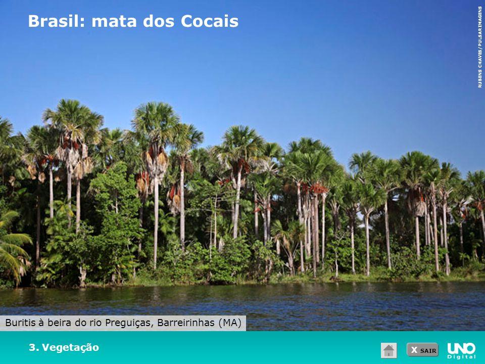X SAIR 3. Vegetação Brasil: mata dos Cocais RUBENS CHAVES/PULSAR IMAGENS Buritis à beira do rio Preguiças, Barreirinhas (MA)