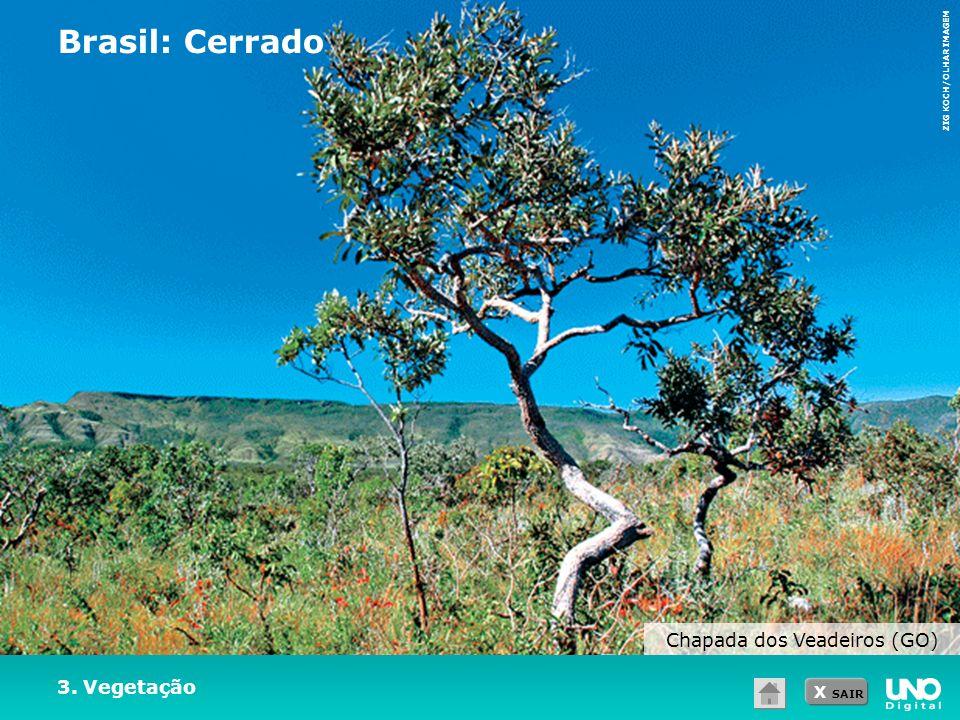 X SAIR 3. Vegetação Brasil: Cerrado ZIG KOCH/OLHAR IMAGEM Chapada dos Veadeiros (GO)