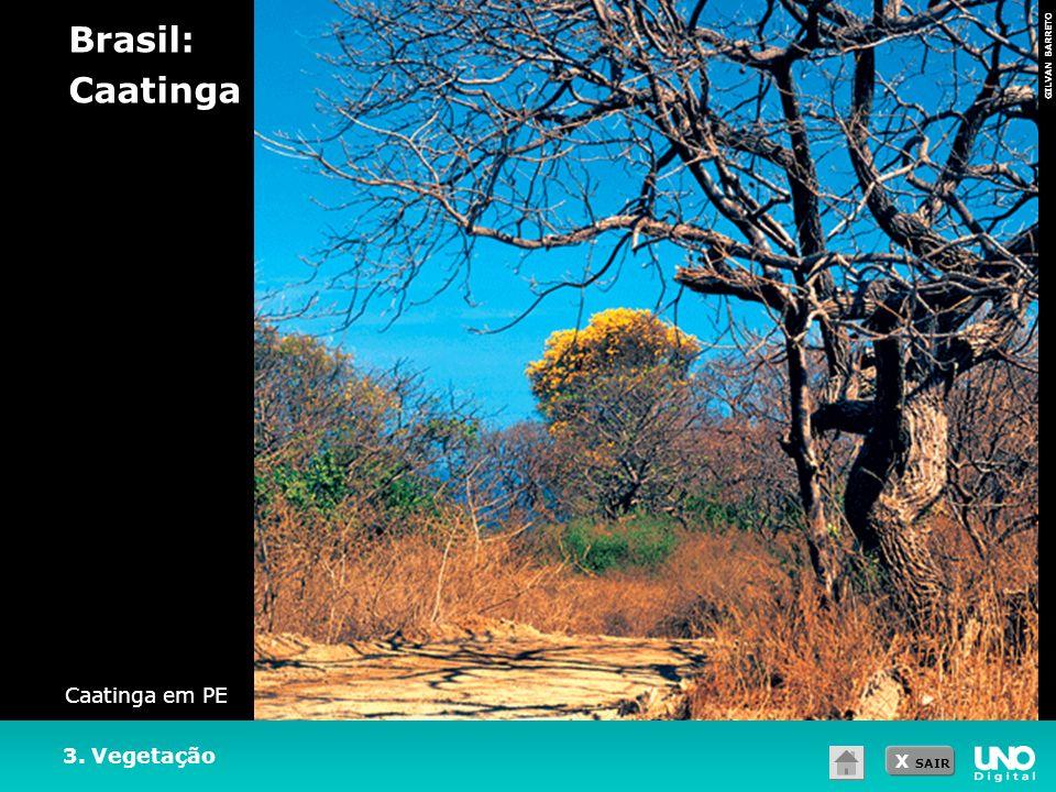 X SAIR GILVAN BARRETO 3. Vegetação Brasil: Caatinga Caatinga em PE