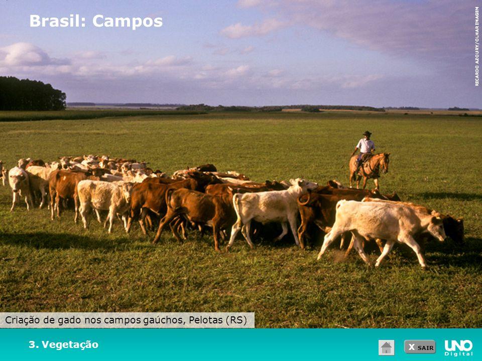 X SAIR 3. Vegetação Brasil: Campos RICARDO AZOURY/OLHAR IMAGEM Criação de gado nos campos gaúchos, Pelotas (RS)