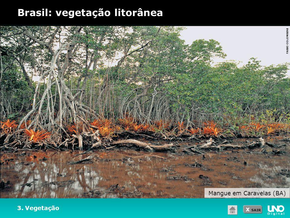 X SAIR 3. Vegetação Brasil: vegetação litorânea Mangue em Caravelas (BA) FABIO COLOMBINI