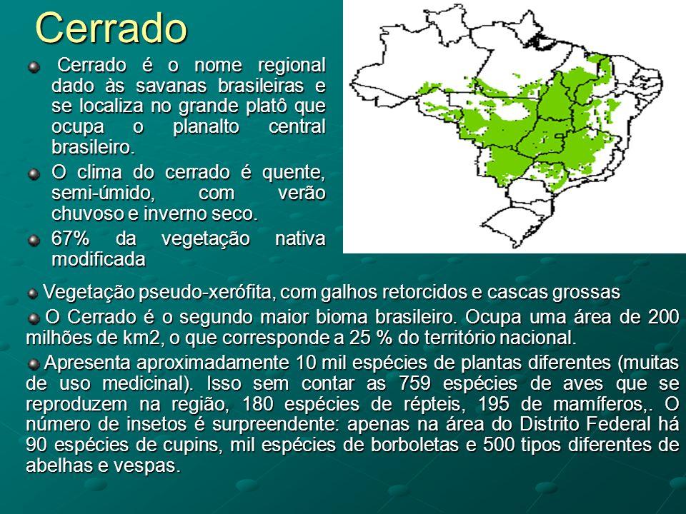 Cerrado Cerrado é o nome regional dado às savanas brasileiras e se localiza no grande platô que ocupa o planalto central brasileiro. Cerrado é o nome