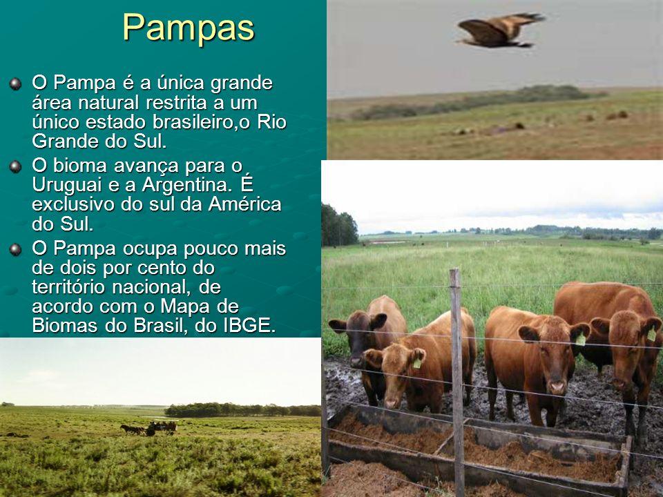 Pampas O Pampa é a única grande área natural restrita a um único estado brasileiro,o Rio Grande do Sul. O bioma avança para o Uruguai e a Argentina. É