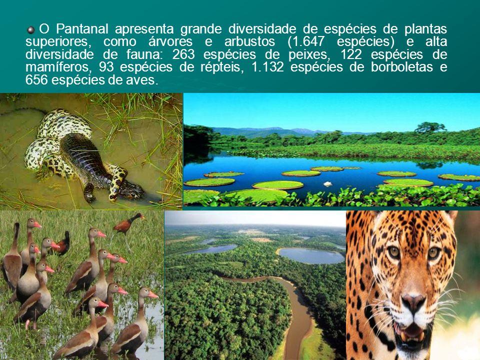 O Pantanal apresenta grande diversidade de espécies de plantas superiores, como árvores e arbustos (1.647 espécies) e alta diversidade de fauna: 263 e