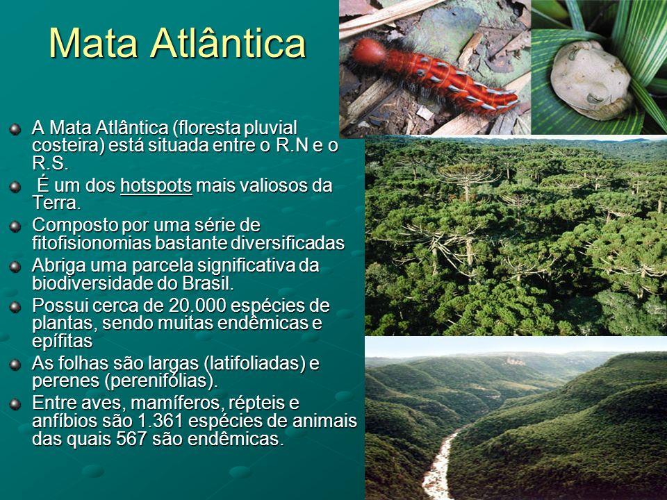 Mata Atlântica A Mata Atlântica (floresta pluvial costeira) está situada entre o R.N e o R.S. É um dos hotspots mais valiosos da Terra. É um dos hotsp