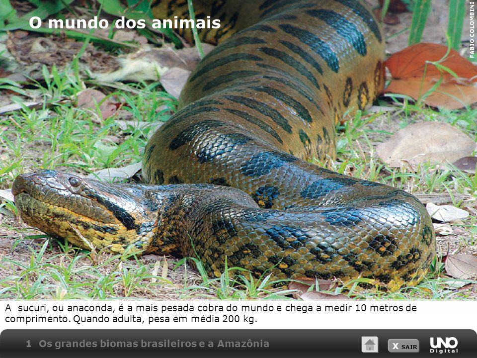 X SAIR O mundo dos animais A sucuri, ou anaconda, é a mais pesada cobra do mundo e chega a medir 10 metros de comprimento. Quando adulta, pesa em médi
