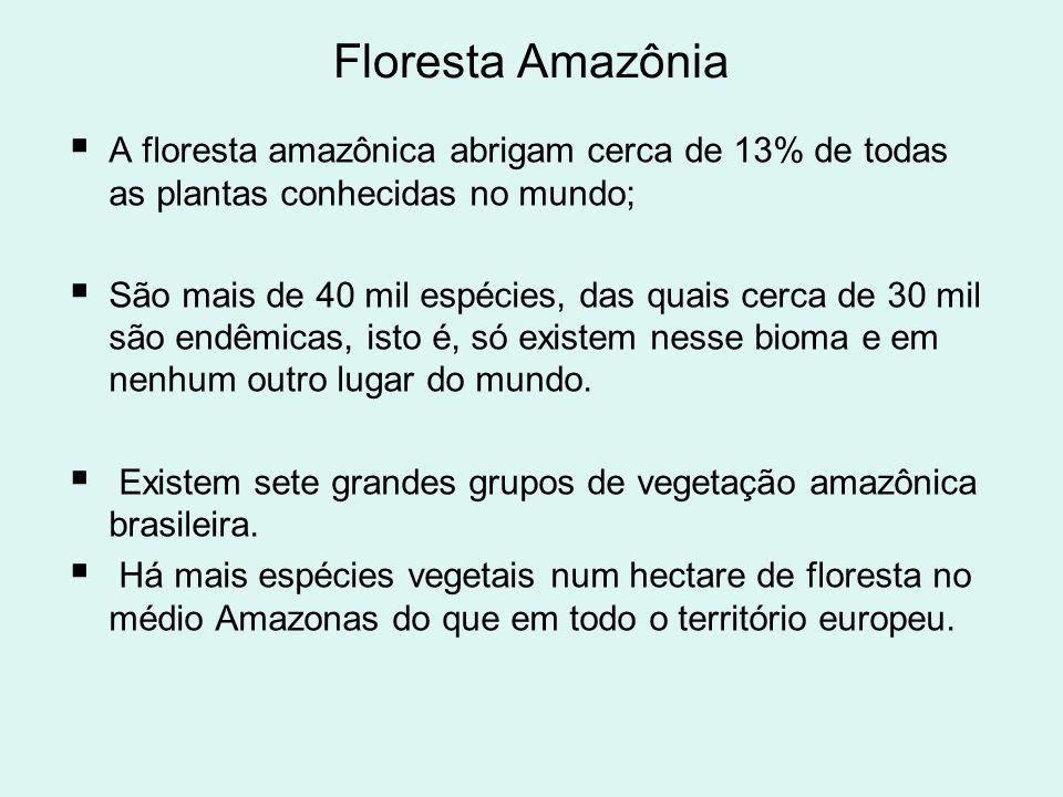Floresta Amazônia A floresta amazônica abrigam cerca de 13% de todas as plantas conhecidas no mundo; São mais de 40 mil espécies, das quais cerca de 3