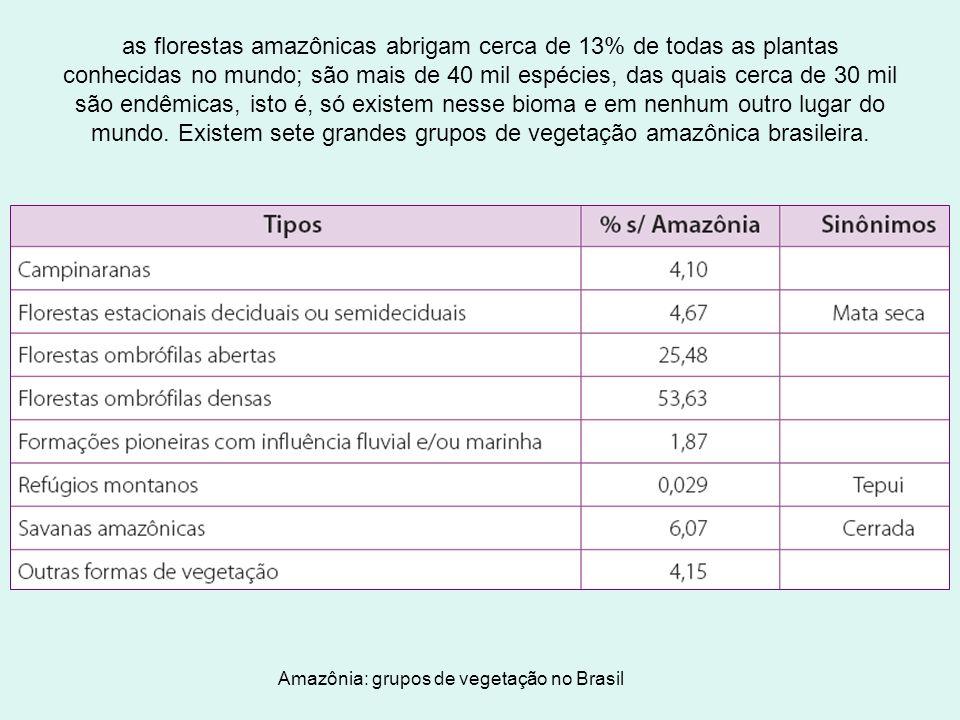as florestas amazônicas abrigam cerca de 13% de todas as plantas conhecidas no mundo; são mais de 40 mil espécies, das quais cerca de 30 mil são endêm