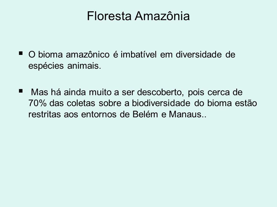 Floresta Amazônia O bioma amazônico é imbatível em diversidade de espécies animais. Mas há ainda muito a ser descoberto, pois cerca de 70% das coletas