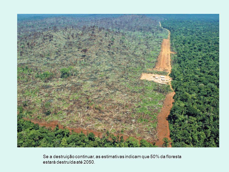 Se a destruição continuar, as estimativas indicam que 50% da floresta estará destruída até 2050. ALBERTO CESAR/AP PHOTO/IMAGE PLUS