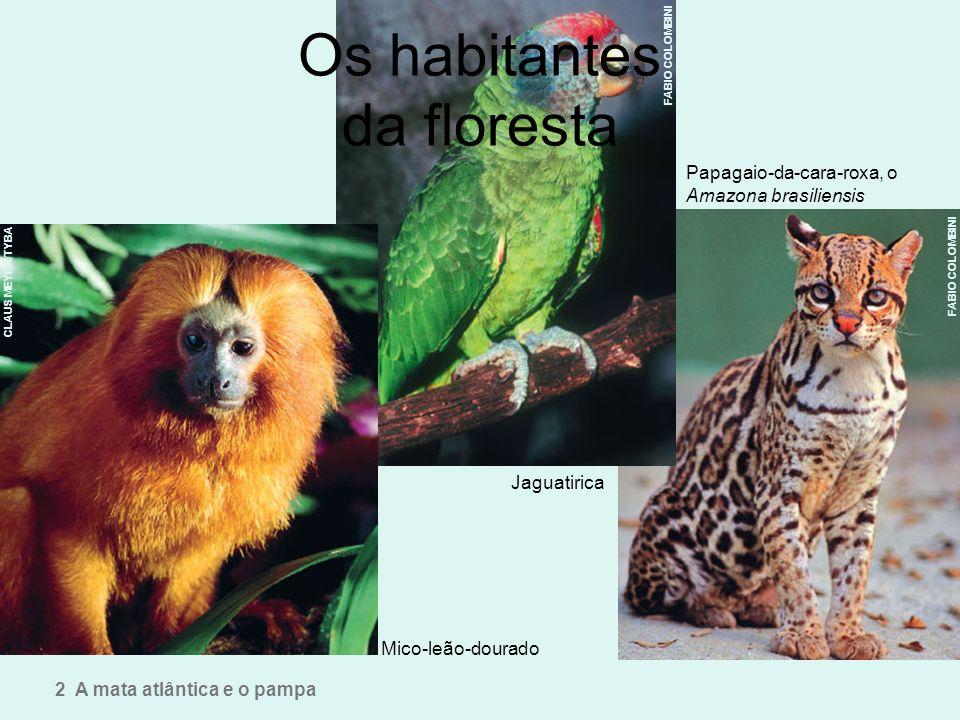Os habitantes da floresta Mico-leão-dourado Papagaio-da-cara-roxa, o Amazona brasiliensis Jaguatirica 2 A mata atlântica e o pampa FABIO COLOMBINI CLA