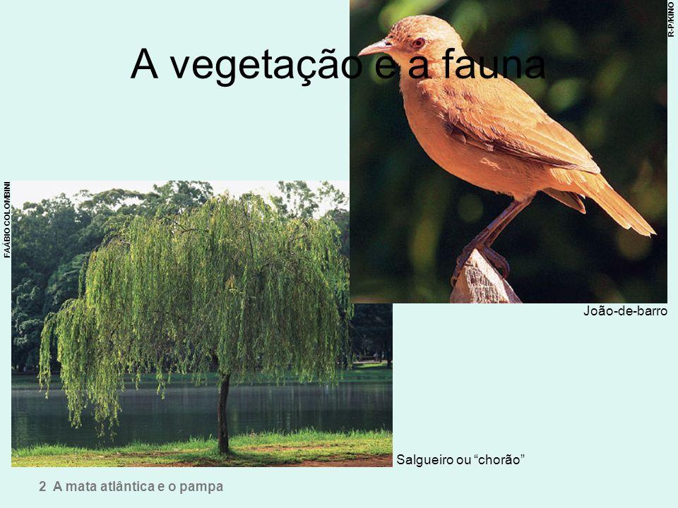 A vegetação e a fauna João-de-barro Salgueiro ou chorão 2 A mata atlântica e o pampa FAÁBIO COLOMBINI R-P/KINO