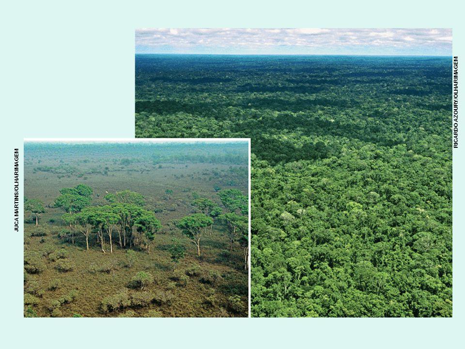 Amazônia Ela é um ícone mundial da biodiversidade; Onde está a maior bacia hidrográfica, a maior floresta tropical e o maior conjunto de espécies de seres vivos do planeta.; o rio Amazonas se lança na mais longa viagem de um rio na Terra: 6.850 km de extensão (o rio Nilo tem 6.670).