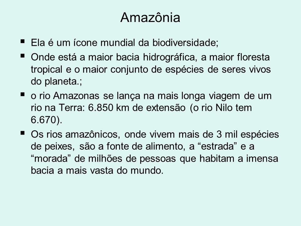Amazônia Ela é um ícone mundial da biodiversidade; Onde está a maior bacia hidrográfica, a maior floresta tropical e o maior conjunto de espécies de s
