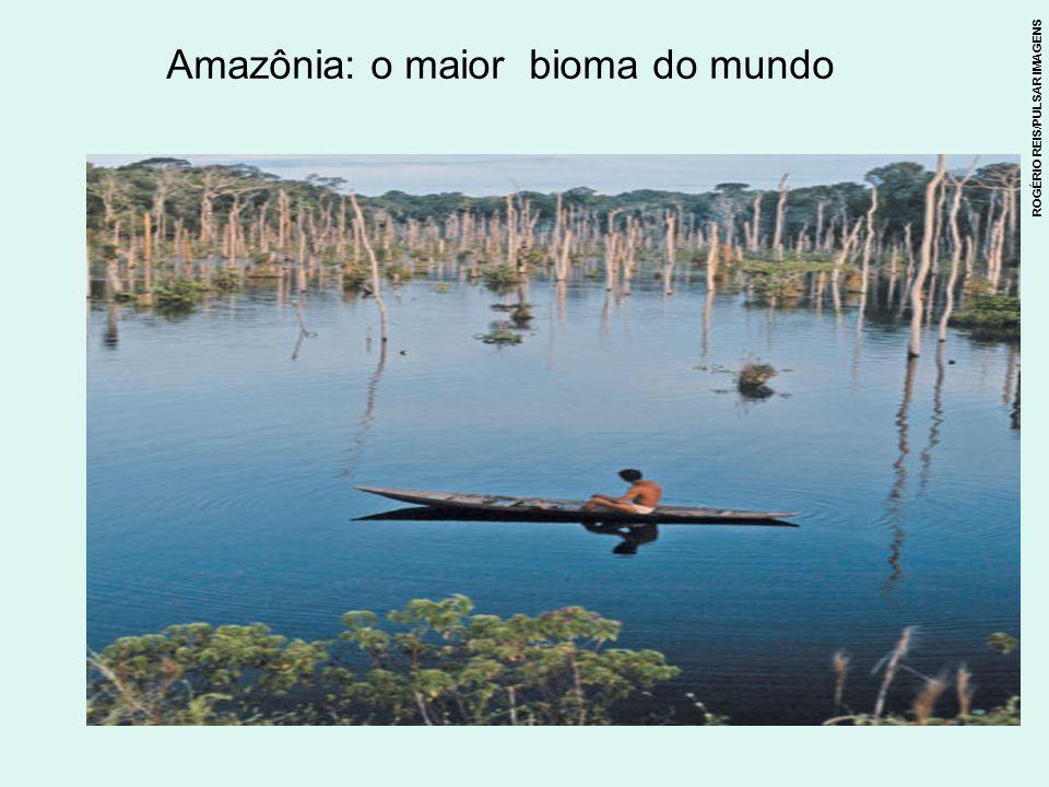 As águas e as matas: um equilíbrio delicado Encontro das águas dos rios Solimões e Negro.