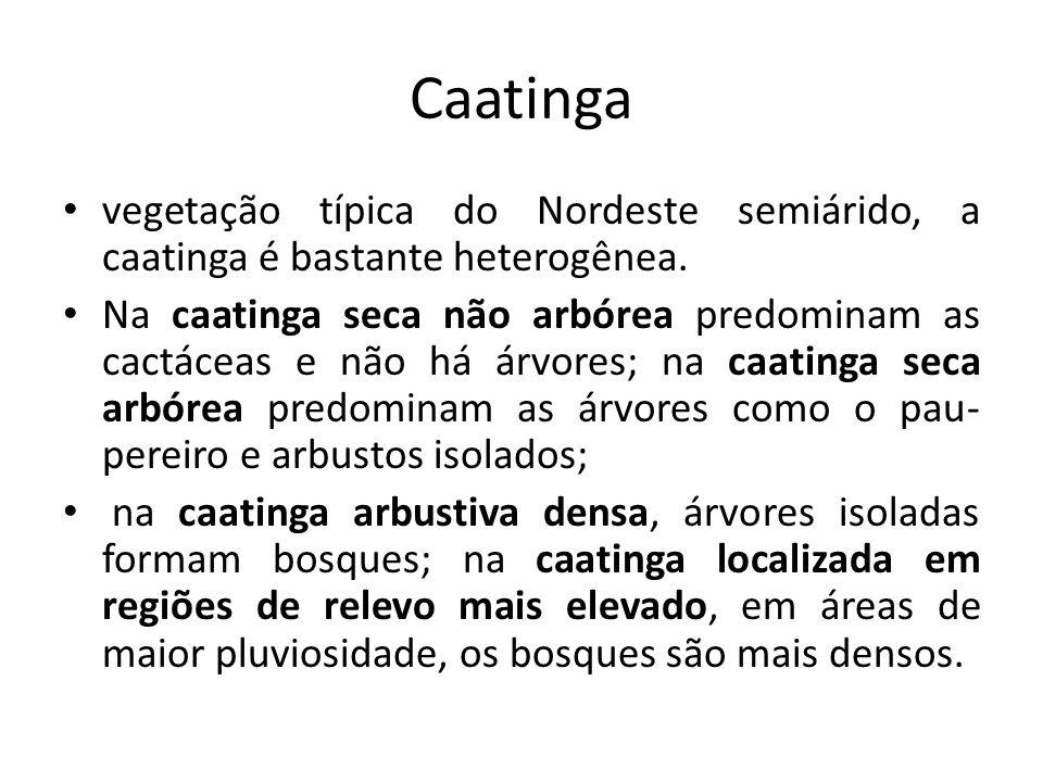 Caatinga vegetação típica do Nordeste semiárido, a caatinga é bastante heterogênea. Na caatinga seca não arbórea predominam as cactáceas e não há árvo