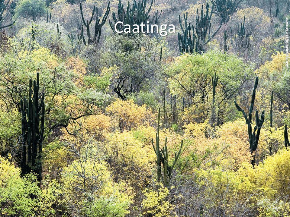 Caatinga JUAN PRATGINESTÓS/SAMBAPHOTO
