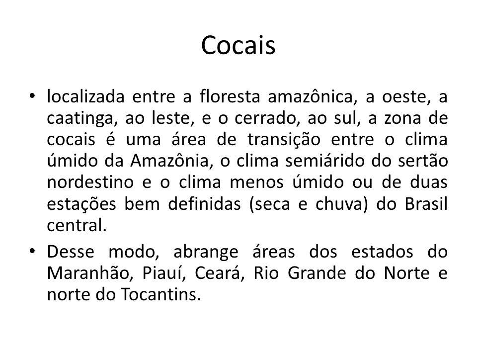 Cocais localizada entre a floresta amazônica, a oeste, a caatinga, ao leste, e o cerrado, ao sul, a zona de cocais é uma área de transição entre o cli