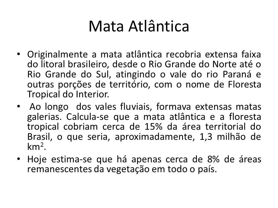 Mata Atlântica Originalmente a mata atlântica recobria extensa faixa do litoral brasileiro, desde o Rio Grande do Norte até o Rio Grande do Sul, ating