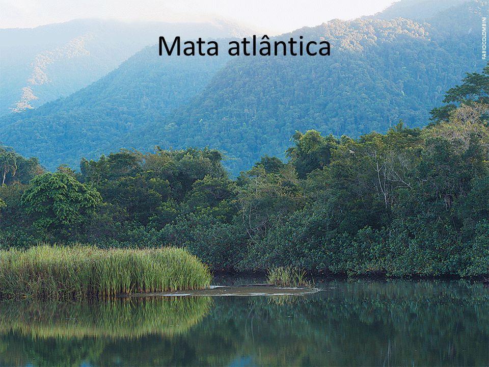 Mata atlântica FABIO COLOMBINI