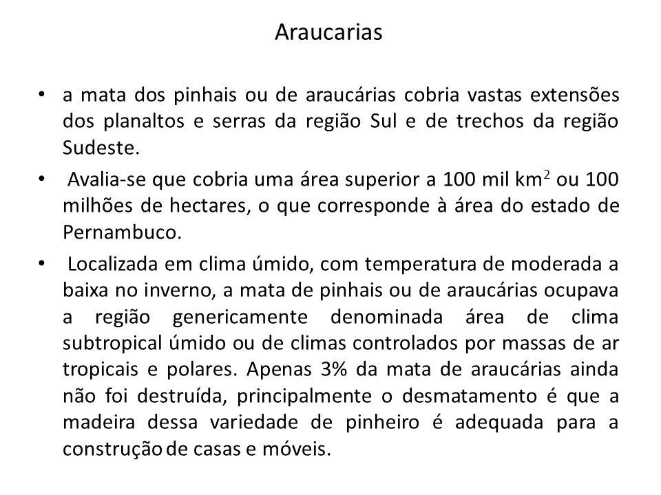 Araucarias a mata dos pinhais ou de araucárias cobria vastas extensões dos planaltos e serras da região Sul e de trechos da região Sudeste. Avalia-se