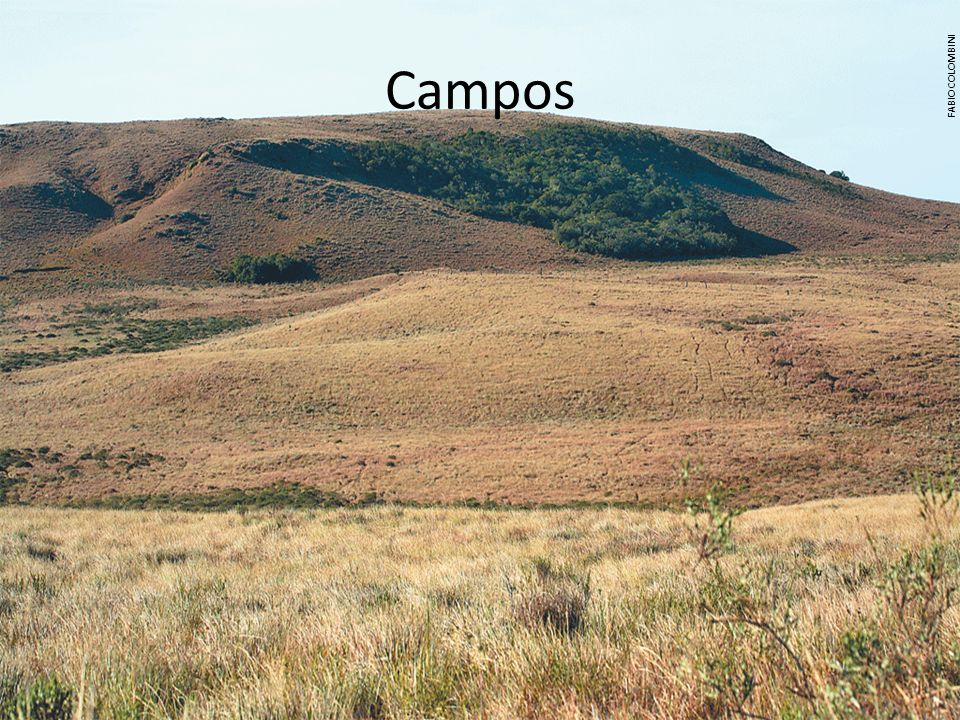 Campos FABIO COLOMBINI