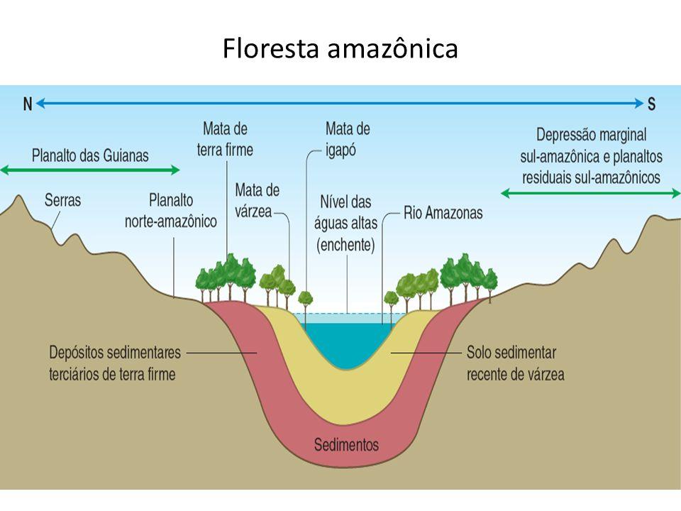 A vitória-régia é uma vegetação característica da mata de igapó. FABIO COLOMBINI