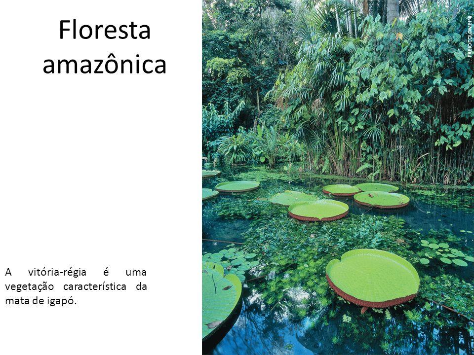Cerrado O cerrado é um domínio vegetal nativo do Brasil central, mas ocorre também em manchas de maiores ou menores extensões em Minas Gerais, São Paulo, porção ocidental da Bahia, sul do Maranhão, largos trechos do Piauí, Mato Grosso do Sul, Mato Grosso, Rondônia, Roraima e Pará.