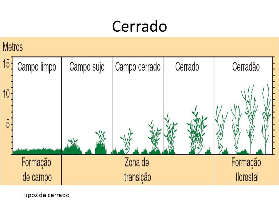 Cerrado Para ser adequado à agricultura, o solo do cerrado precisa do acréscimo de nutrientes e de correção que reduza sua acidez.