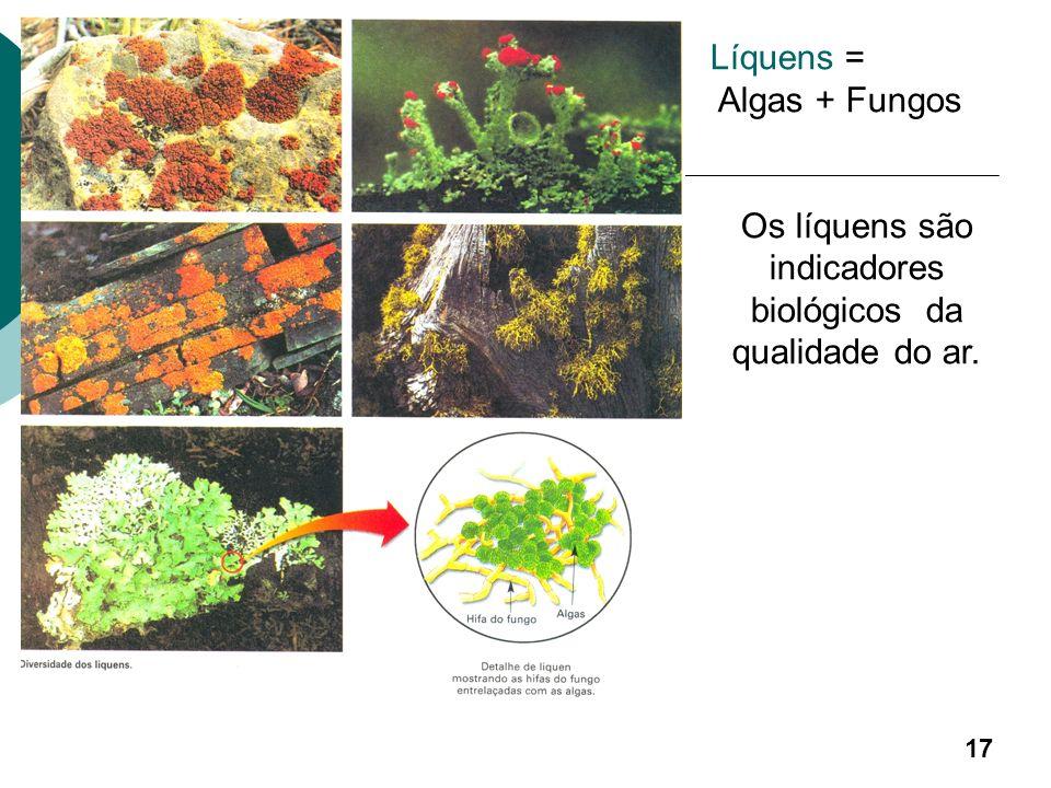 Algumas espécies realizam mutualismo com fungos formando Líquens