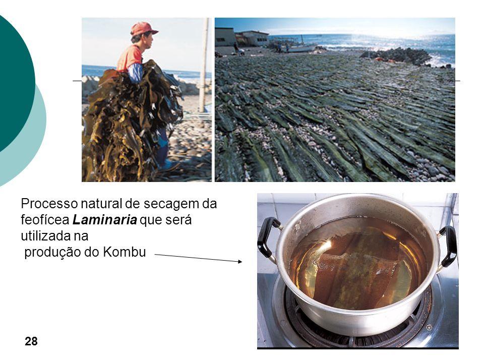 Feofícea chamada Laminaria, sendo secada para posterior consumo 27