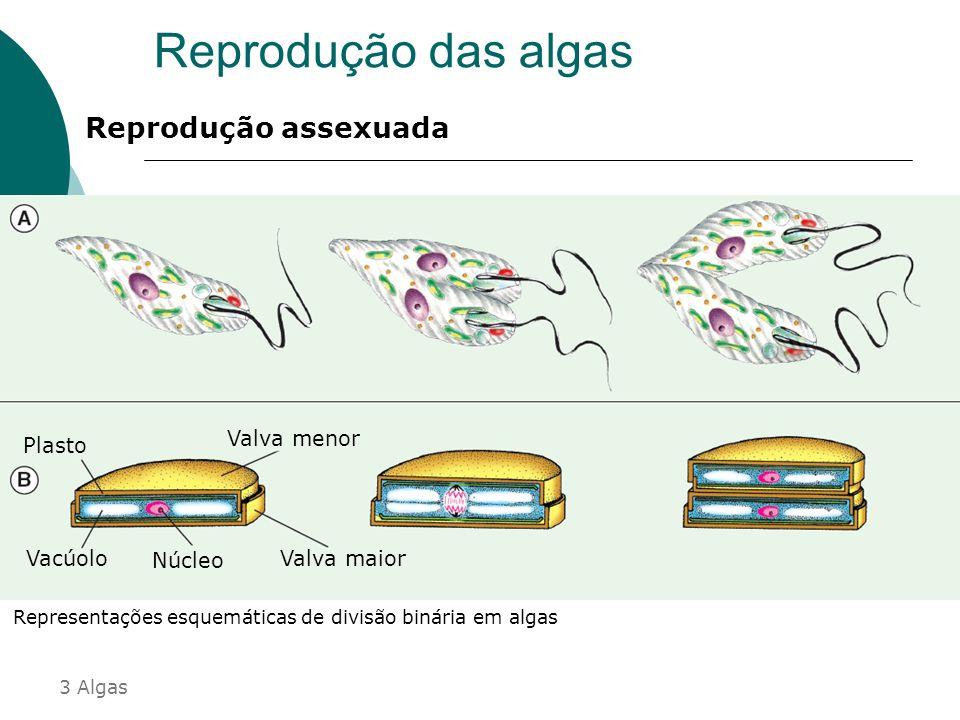 Reprodução Sexuada Conjugação : Envolve a troca de material genético por ponte citoplasmática ocasionando variabilidade na espécie, favorecendo a adap