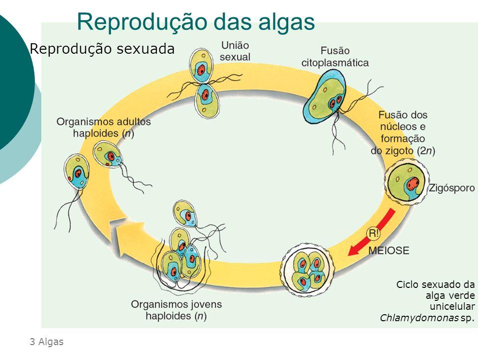 Reprodução das algas Reprodução assexuada Representações esquemáticas de divisão binária em algas Plasto Valva menor Vacúolo Núcleo Valva maior 3 Alga