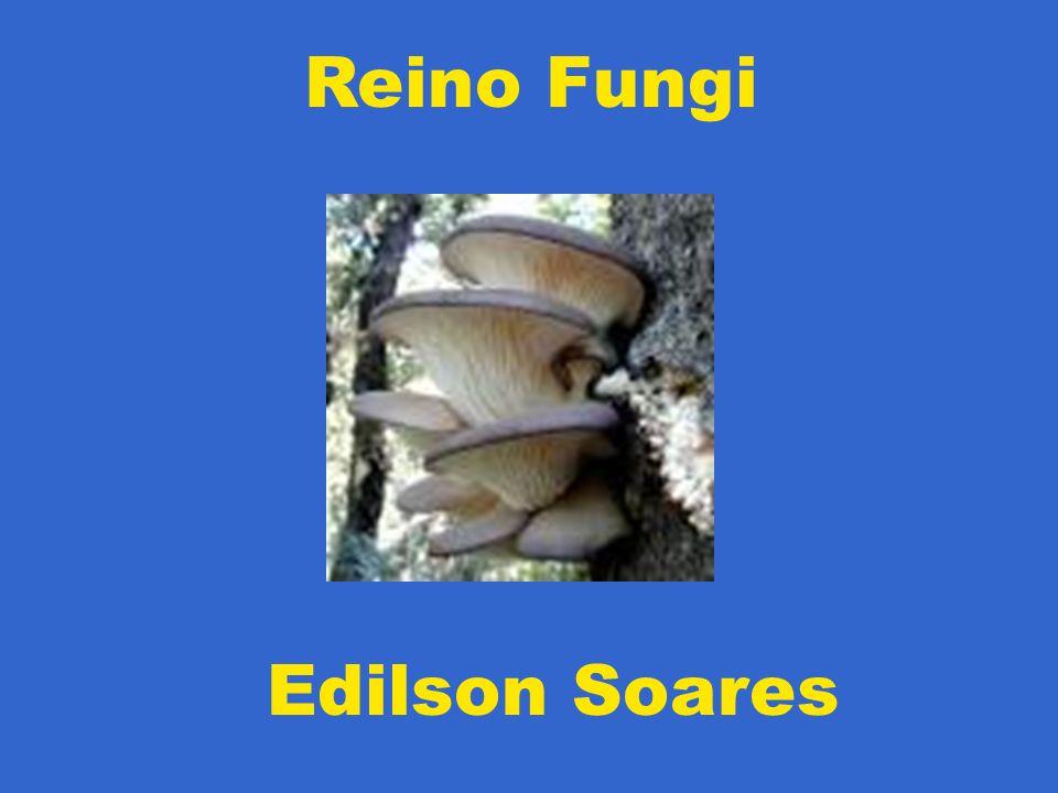 Haplóide (n) Dicariótico (n + n) Diplóide (2n) Estrutura formadora de esporos (n) Esporos (n) Germinação Plasmogamia (fusão do citoplasma) Estágio dicariótico (n + n) Cariogamia (fusão dos núcleos) Estágio diplóide (2n) Meiose Estrutura formadora de esporos (n) Esporos (n) Reprodução Assexuada Reprodução Sexuada Micélio (n) CICLO REPRODUTOR GERAL