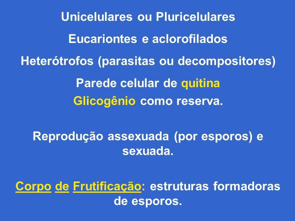 Unicelulares ou Pluricelulares Eucariontes e aclorofilados Heterótrofos (parasitas ou decompositores) Parede celular de quitina Glicogênio como reserva.