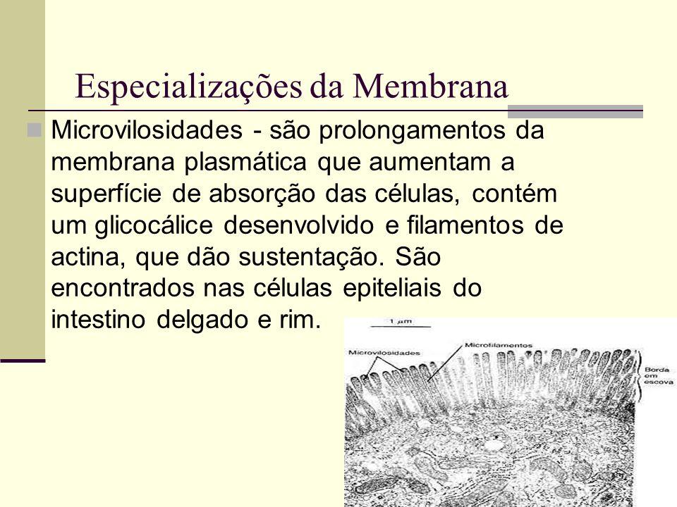 Especializações da Membrana Microvilosidades - são prolongamentos da membrana plasmática que aumentam a superfície de absorção das células, contém um