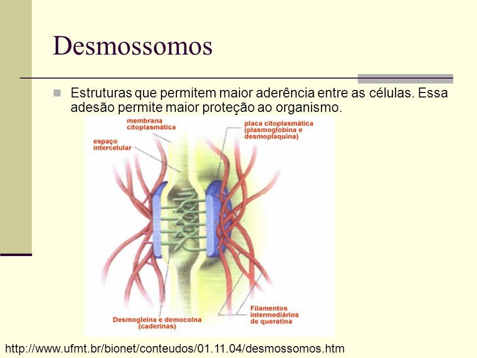 Desmossomos Estruturas que permitem maior aderência entre as células. Essa adesão permite maior proteção ao organismo. http://www.ufmt.br/bionet/conte