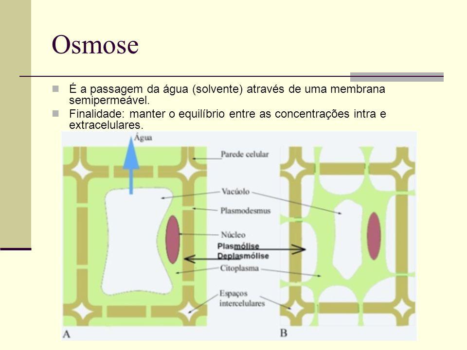 Osmose É a passagem da água (solvente) através de uma membrana semipermeável. Finalidade: manter o equilíbrio entre as concentrações intra e extracelu