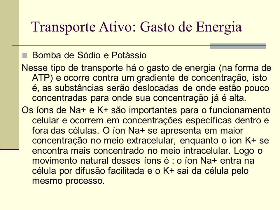 Transporte Ativo: Gasto de Energia Bomba de Sódio e Potássio Nesse tipo de transporte há o gasto de energia (na forma de ATP) e ocorre contra um gradi