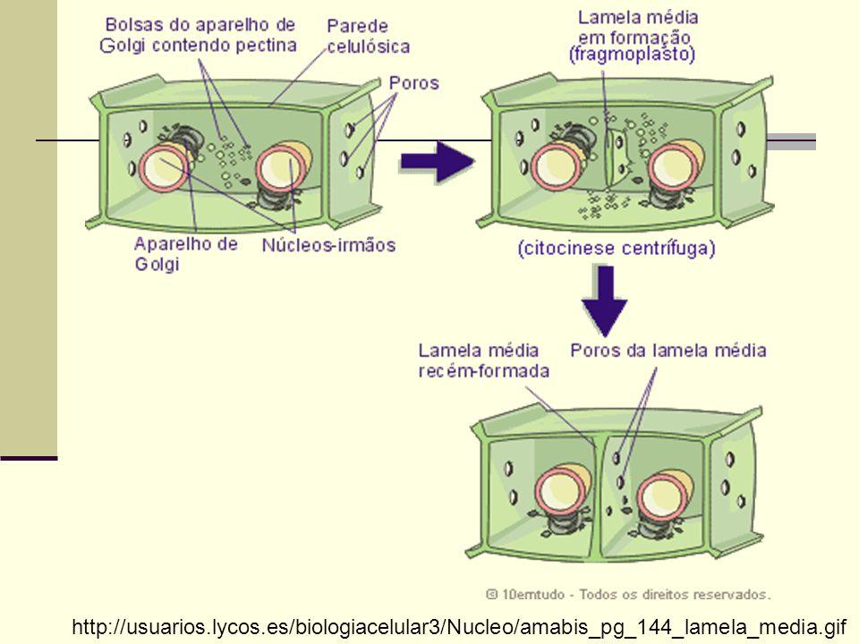 Desmossomos Estruturas que permitem maior aderência entre as células.