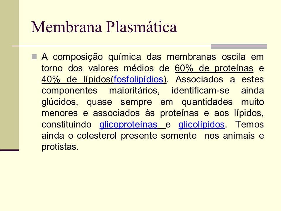 Propriedades Devido às proteínas Elasticidade Resistência mecânica Baixa tensão superficial Devido aos lipídios Alta resistência elétrica Alta permeabilidade às substâncias lipossolúveis.