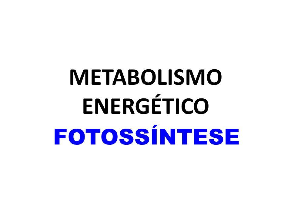 METABOLISMO ENERGÉTICO FOTOSSÍNTESE