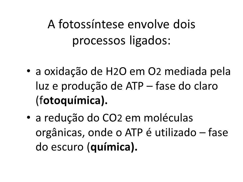 A fotossíntese envolve dois processos ligados: a oxidação de H 2 O em O 2 mediada pela luz e produção de ATP – fase do claro (fotoquímica). a redução