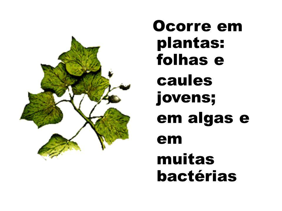 Ocorre em plantas: folhas e caules jovens; em algas e em muitas bactérias