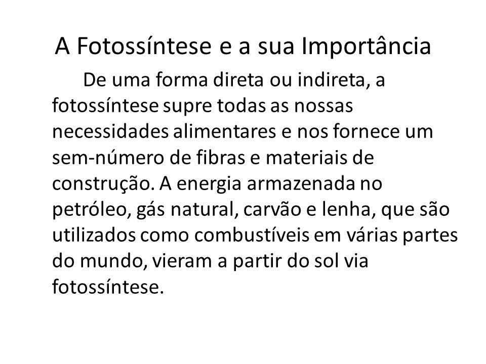 A Fotossíntese e a sua Importância De uma forma direta ou indireta, a fotossíntese supre todas as nossas necessidades alimentares e nos fornece um sem