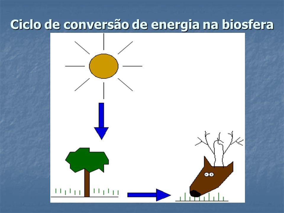 Ciclo de conversão de energia na biosfera