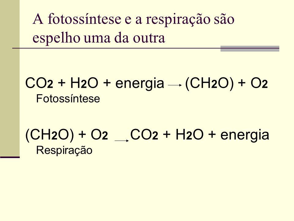 A fotossíntese e a respiração são espelho uma da outra CO 2 + H 2 O + energia (CH 2 O) + O 2 Fotossíntese (CH 2 O) + O 2 CO 2 + H 2 O + energia Respir