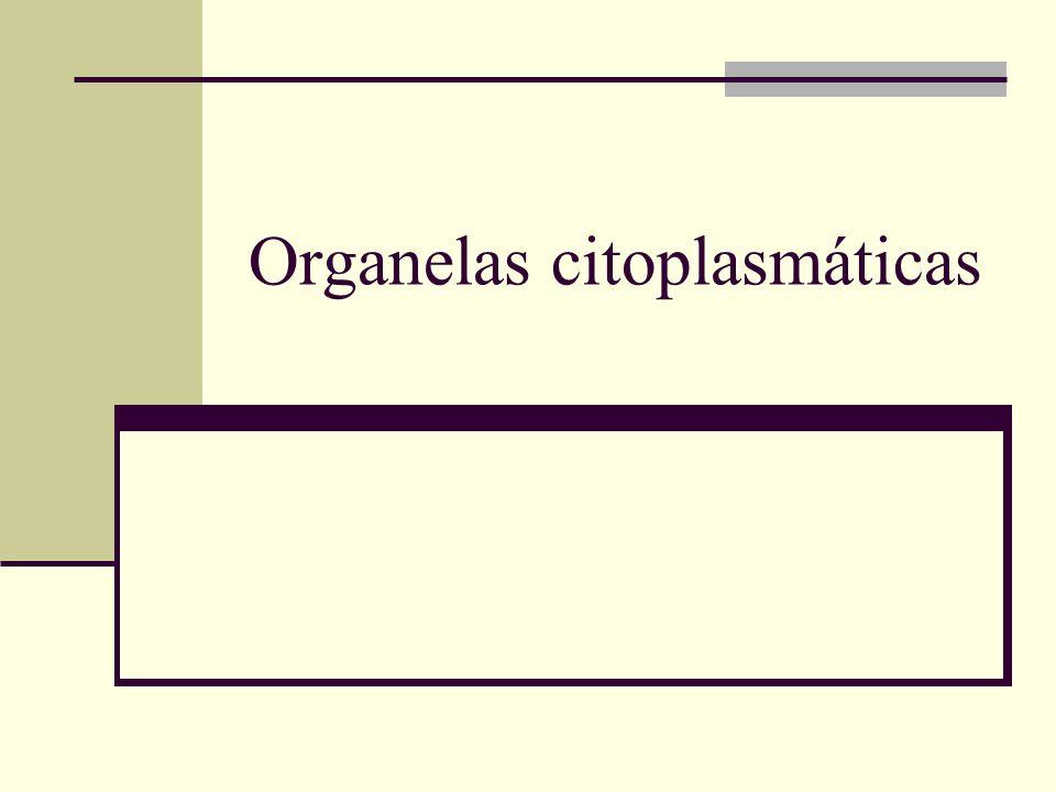 Organelas citoplasmáticas