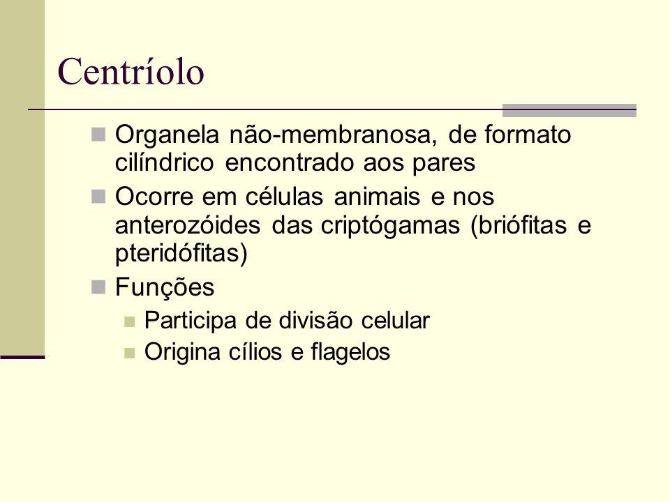 Centríolo Organela não-membranosa, de formato cilíndrico encontrado aos pares Ocorre em células animais e nos anterozóides das criptógamas (briófitas